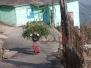 darjeeling 30