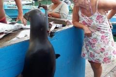 Les Galapagos 4